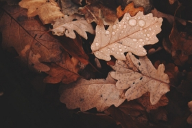 Autumn leaves: the dangers